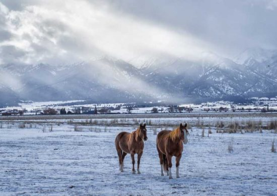Two horses weather a winter storm in Baker Valley, Oregon.