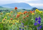 2017 Northeast Oregon Wall Calendar Cover Photo - Wild Indian Paintbrush grows in multiple colors with Mt. Harris in the background, Union County, Oregon.