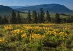 Mt. Harris overlooks a field of wild balsamroot in Union County, Oregon