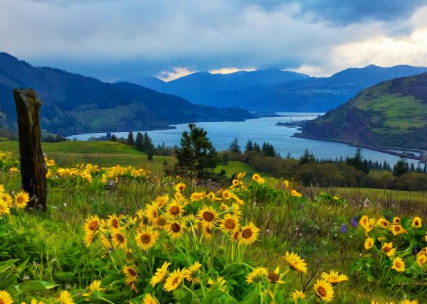 Columbia River Gorgeous is a photo of Arrowleaf Balsamroot in full bloom along the Columbia River in Oregon.