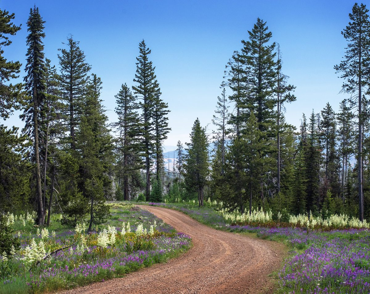 Forest Road 66 is a beautiful wildflower drive in the spring.