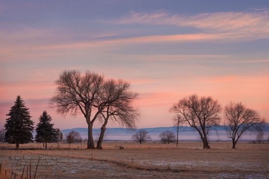 A photo of leafless trees on a cold winter morning with a warm sunrise in the sky.