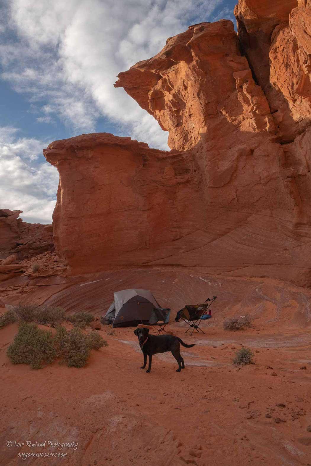 Dog at Camp