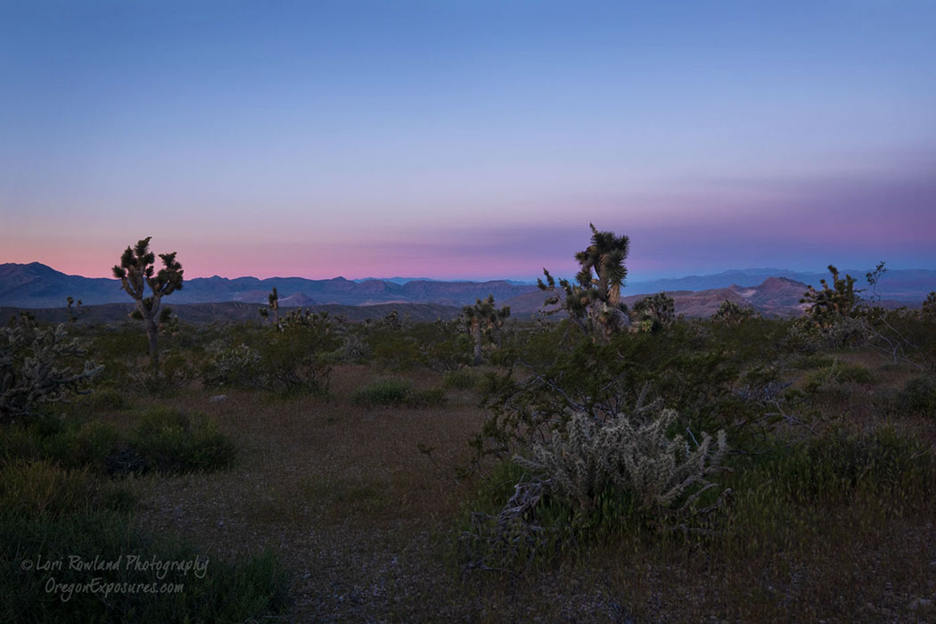 Soft colors just after sunset in the Gold Butte Desert