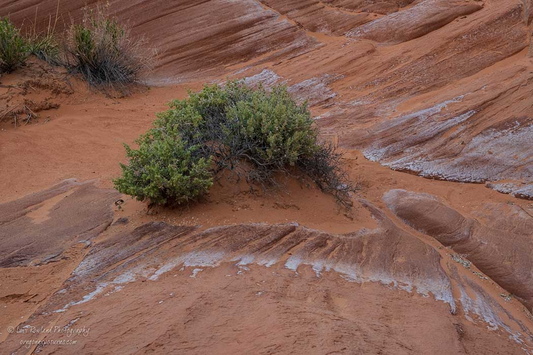 A desert bush manages to find a place to thrive at Gold Butte National Monument.