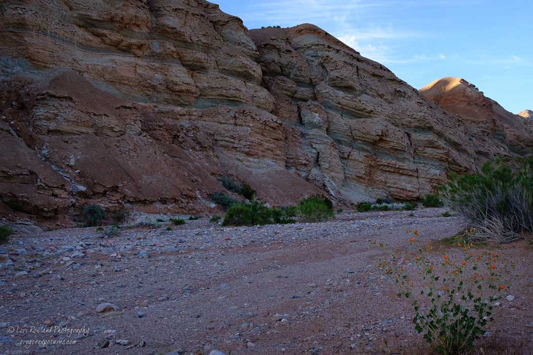 Desert wash in Gold Butte National Monument, Nevada.