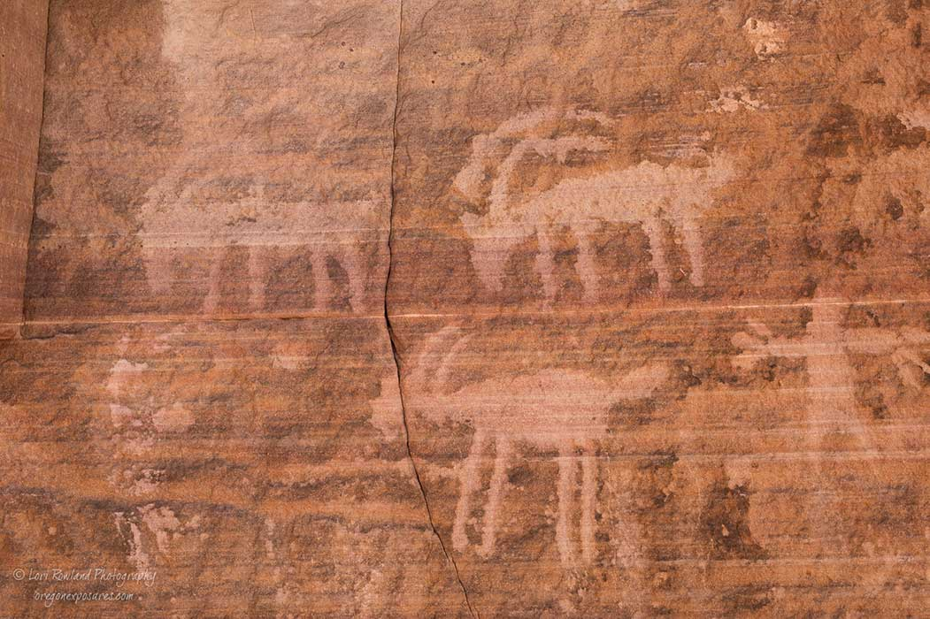 Bighorn Sheep Petroglyphs at Gold Butte National Monument.