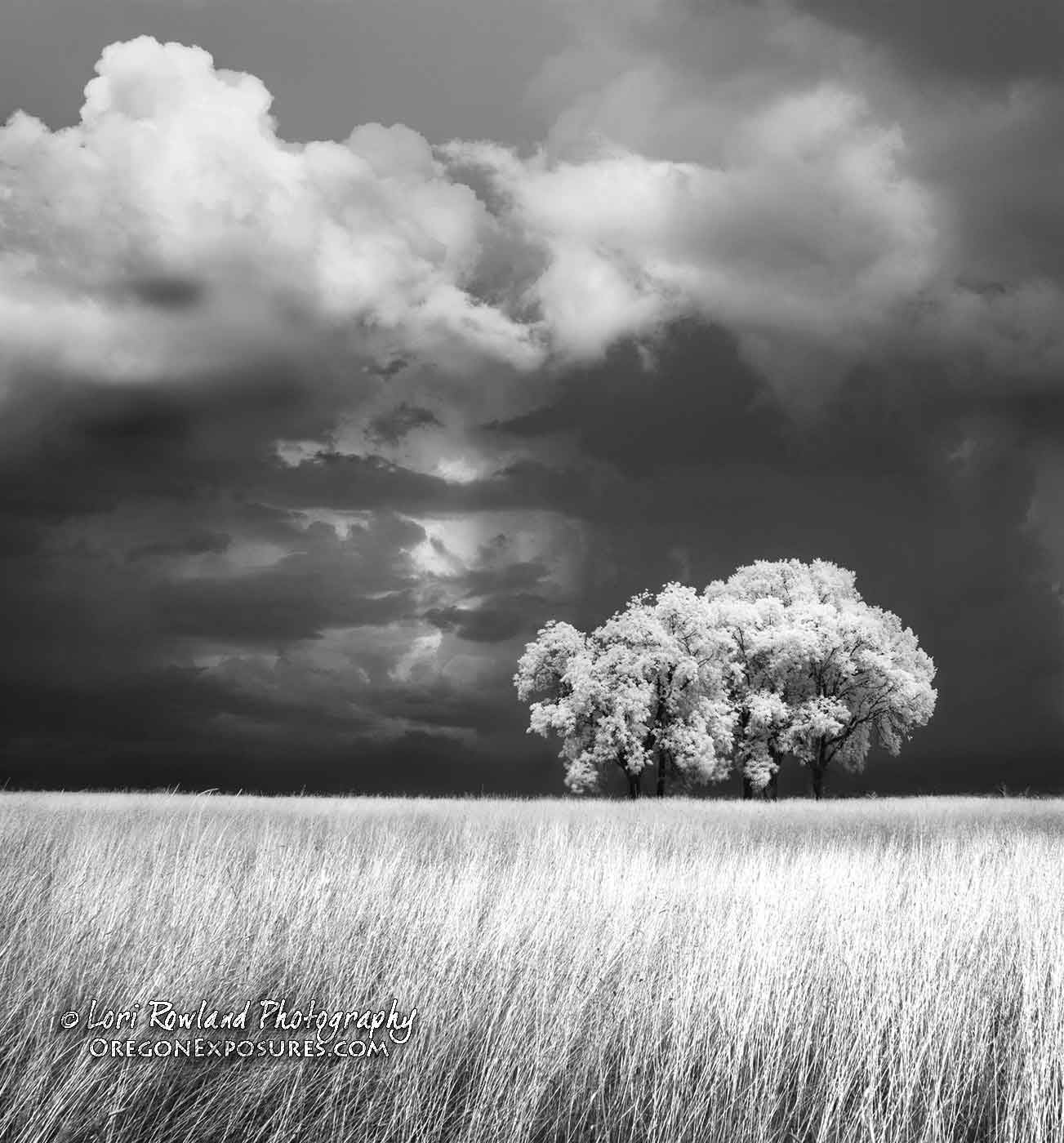 Tree and Storm Clouds in Infrared
