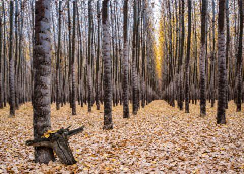 Boardman Tree Farm in Oregon by Lori Rowland Photography