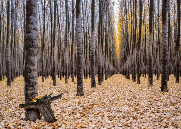 Boardman Tree Farm in Oregon by Lori Rowland Photography